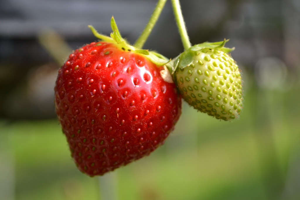 Strawberries contain flavonoids which is what gives them their bright red colour.